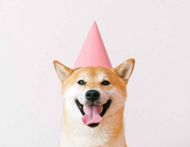 excited shiba dog wearing a party hat